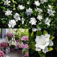 Растения с ароматными цветами для украшения сада.